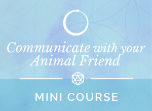 Communicate with your Animal Friends